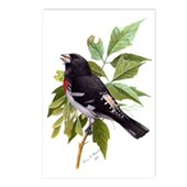 Rose-breasted Grosbeak Postcards (Package of 8)